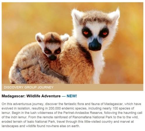 madagascar, travel, nature, animals